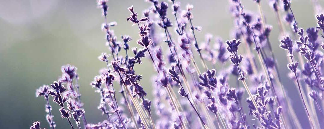 14 curiosidades sobre el aroma y el olfato